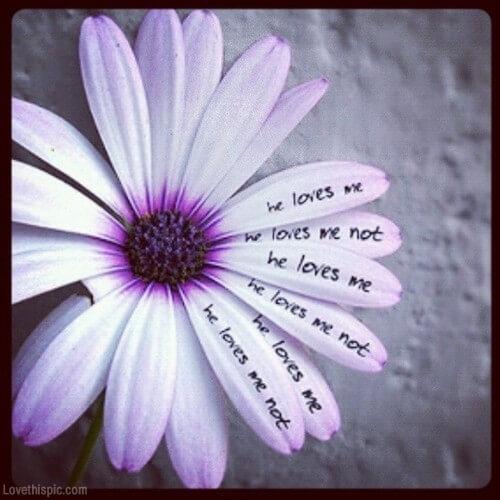 Blume, er liebt mich, er liebt mich nicht